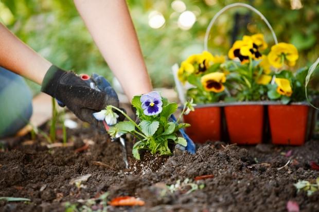 gardening-spring