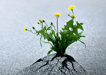 miracle-grow