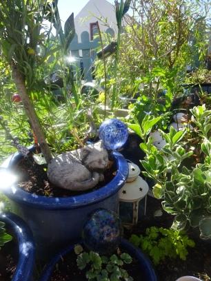 garden 018