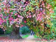 colourful_world_by_ggeeoorrggiaa-d4e0gw4