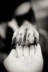Hand in Paw, Best of Friends. | Animali, Animali domestici ...