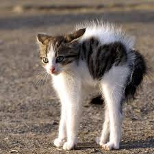"What does ""the cat's fur was on end"" mean? - Question about ..."