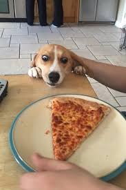 Delicious Foods Everywhere - 34 photos | Funny animals, Funny dog ...