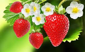 strawberry | Description, Cultivation, Species, & Facts | Britannica