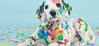 Can Dogs Smell Paint? - Wag!
